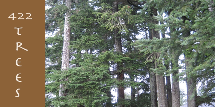 422trees-title-crop